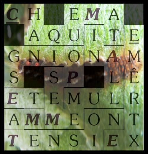 CHAQUE MATIN ALLUME-letcr1-exp