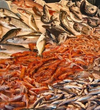 C EST LE PEUPLE DES NOMBREUX-poissons